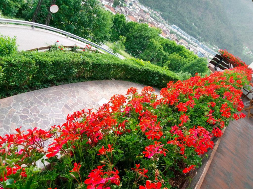 geranei-terrazza